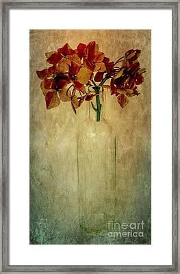 Hydrangea Framed Print by Elena Nosyreva