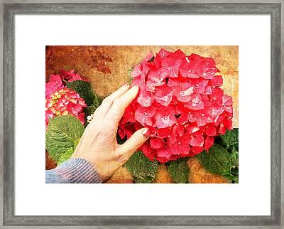 Framed Print featuring the digital art Hydrangea by Helene U Taylor
