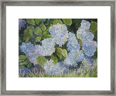 Hydrangea IIi Sold Framed Print