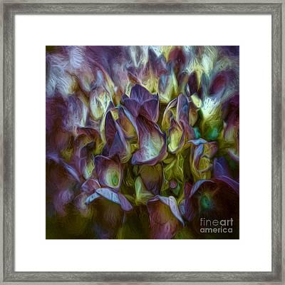 Hydrangea Joy Framed Print by Jean OKeeffe Macro Abundance Art