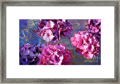 Hydrangea Mix Framed Print by Beverly Guilliams