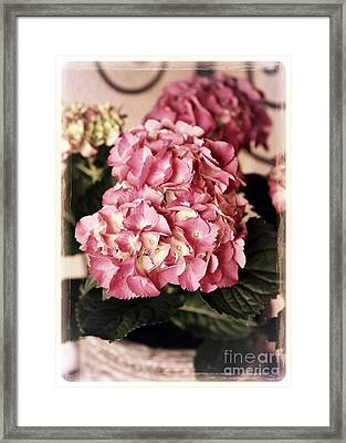 Hydrangea On The Veranda Framed Print