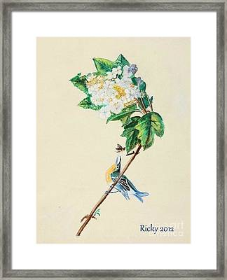 Hydrangea With Yellow Breasted  Vireo After Audubon Framed Print by Veronica Rickard