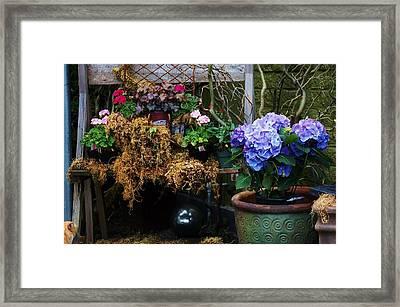 Hydrangeas Framed Print by Helen Carson
