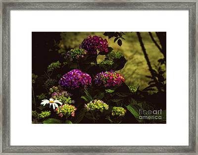 Hydrangeas In The Shade  Framed Print by Elaine Manley