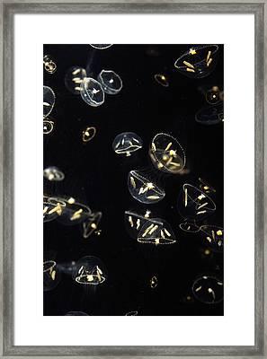 Hydrozoan Group Japan Framed Print