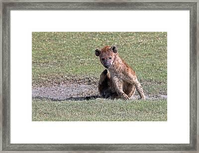 Hyena Framed Print by Tony Murtagh