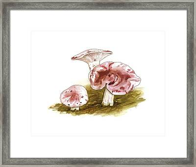 Hygrophorus Russula Mushrooms, Artwork Framed Print by Science Photo Library