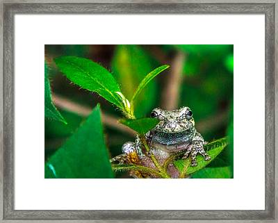 Framed Print featuring the photograph Hyla Versicolor by Rob Sellers
