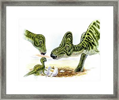 Hypacrosaurus Dinosaurs And Young Framed Print by Deagostini/uig