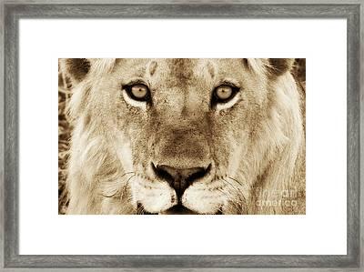 Hypno Lion Framed Print