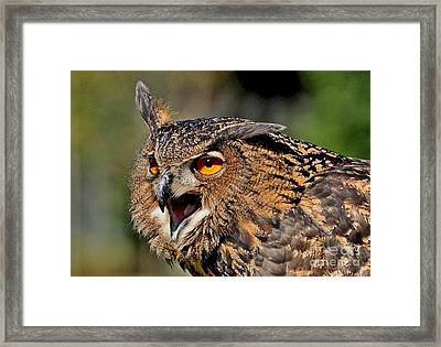 Framed Print featuring the photograph Hypnotic by Kathy Baccari