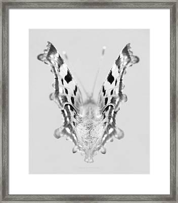 Hypnotic Framed Print