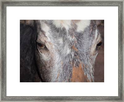 Hypnotize Framed Print by Kathy Peltomaa Lewis