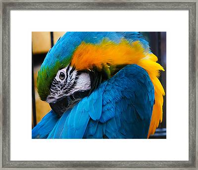 I Always Feel Like Somebody's Watching Me Framed Print by Robert L Jackson