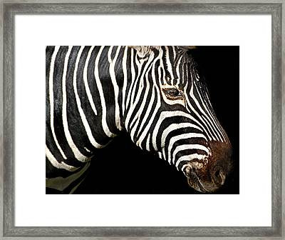 I Am A Zebra Framed Print
