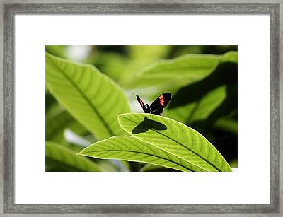 I Am Big Framed Print by Jennifer Sturch