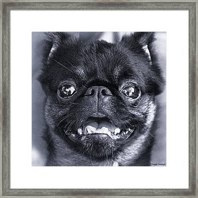 I Am Cute And I Know It Framed Print by Roger Wedegis