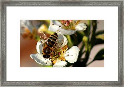 I Am Glad You Are Here Framed Print by Silke Brubaker