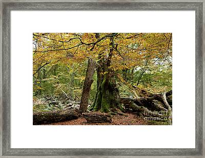 I Am Here Since Almost 1000 Years Framed Print