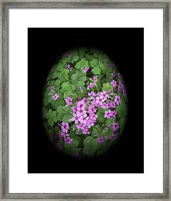 I Am In Clover Framed Print by Linda Phelps