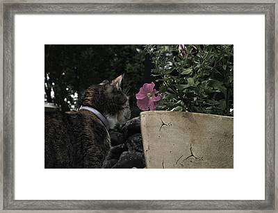 I Am In Love Framed Print