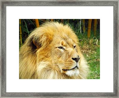 I Am King Framed Print by Clare Bevan