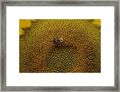 I Am Lost Framed Print