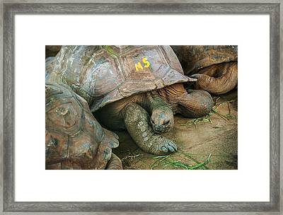 I Am Number Five And Who Are You ? Framed Print