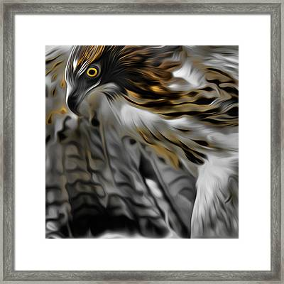 I Am Redtail Square Framed Print by Bill Wakeley