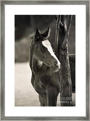 I Am So Innocent  Framed Print by Angel Ciesniarska
