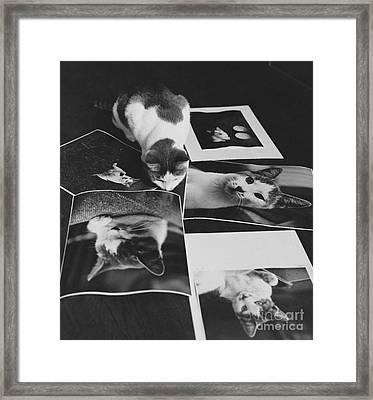 I Am So Photogenic Framed Print by Suzanne Szasz