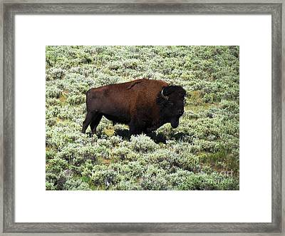 I Am The King Of This Meadow Framed Print