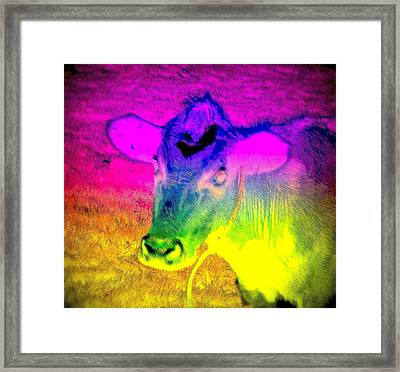 I Think I Am The Most Colorful Cow You Know  Framed Print by Hilde Widerberg