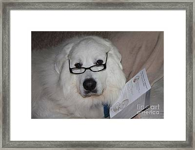 I Am Trying To Read Stop Taking My Picture Framed Print by John Telfer