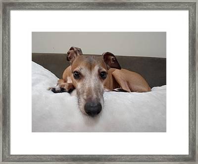I Am Watching You - Dragon - Italian Greyhound Framed Print by Santos Arellano