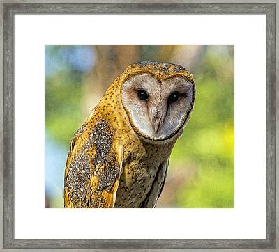 Framed Print featuring the photograph I Am Wise by Constantine Gregory