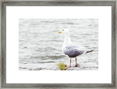 I Believe I Can Fly - Seagull Photo Framed Print by Ivy Ho