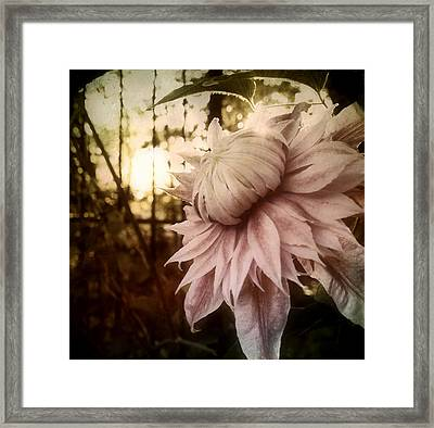 Framed Print featuring the photograph I Bloom Only For You She Whispered by Susan Maxwell Schmidt