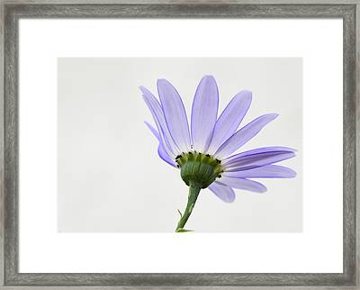 I Can Almost See Right Through You Framed Print