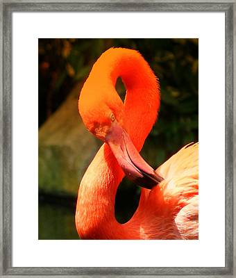 I Can Count To 8 - Flamingo Framed Print by DerekTXFactor Creative