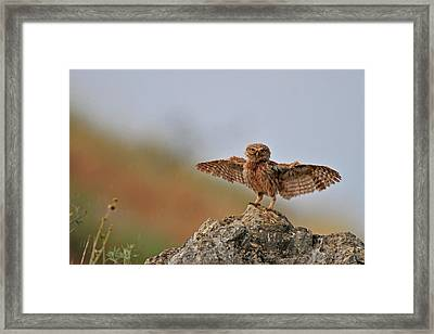 I Can Fly..!!!!!! Framed Print