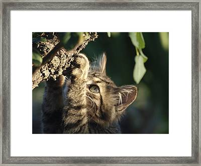 I Can Get It Framed Print by Camille Lopez