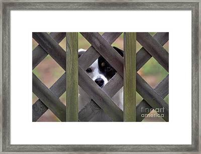 I Can See Framed Print by David G Nichols