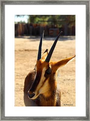 I Can See You Carl Framed Print by Dick Botkin