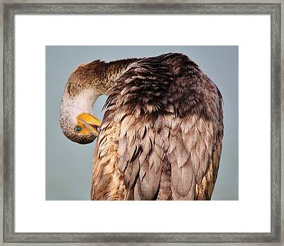 I Can See You Framed Print by Paulette Thomas