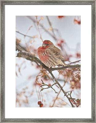 I Cannot Believe It Is So Cold Framed Print