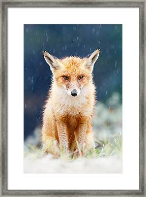 I Can't Stand The Rain  Fox In A Rain Shower Framed Print by Roeselien Raimond