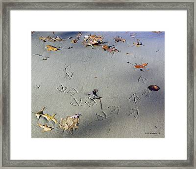I Changed My Mind Framed Print by Brian Wallace