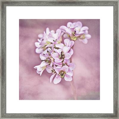 I Cn Do Pink Framed Print by Chris Lord